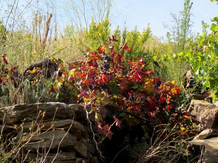 rando autour de cerbére (fin octobre 2013) Img_8332