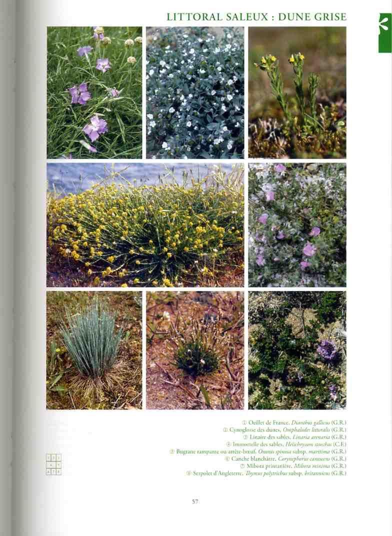 atlas botanique Linair10