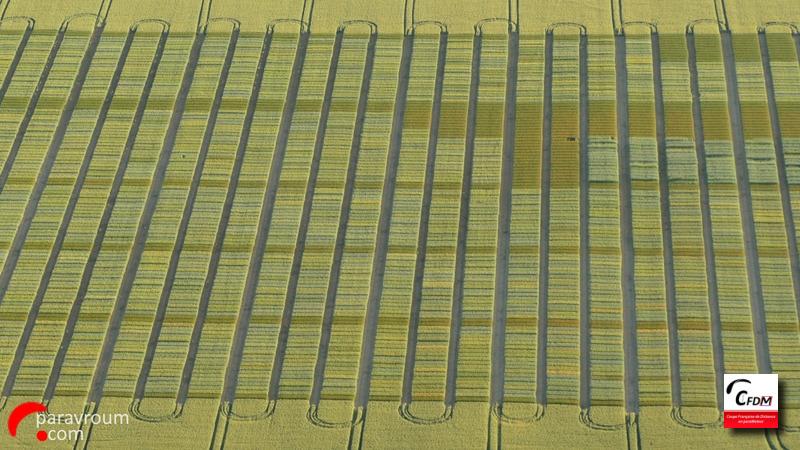 4618 - 31/05/19 - Marc WEYER - 56 km - homologué Image996