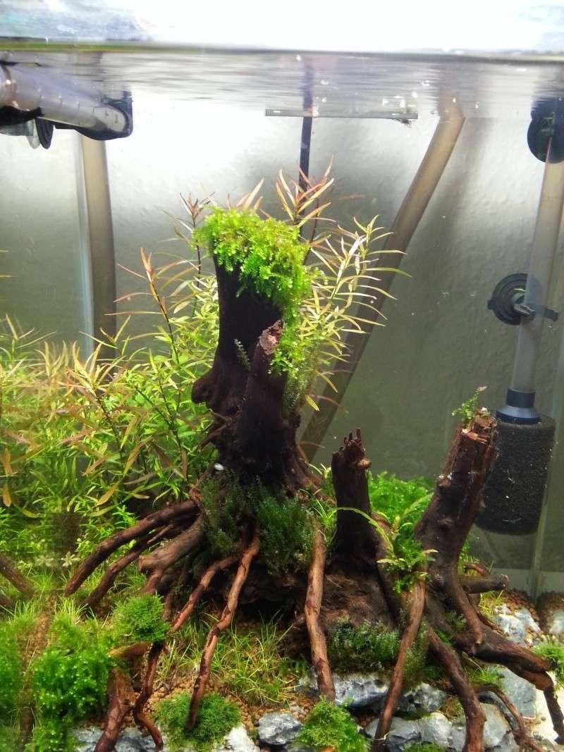 Nouveau bac à crevettes version aquascaping 20131211