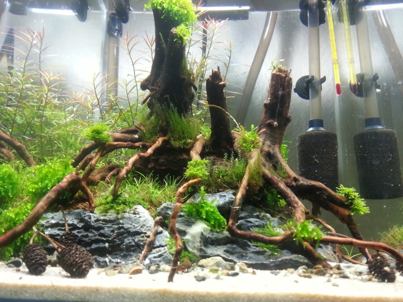 Nouveau bac à crevettes version aquascaping 20131213