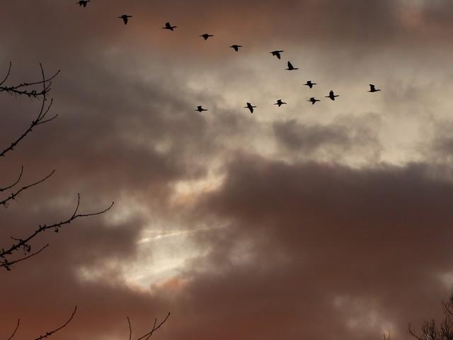 37 - Les nuages..... photos reçues  - Page 3 P1000614