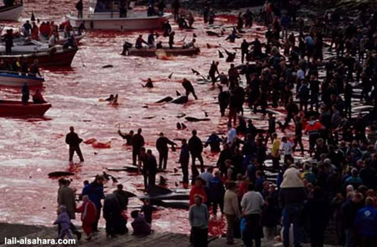 Le massacre des Dauphins Image013