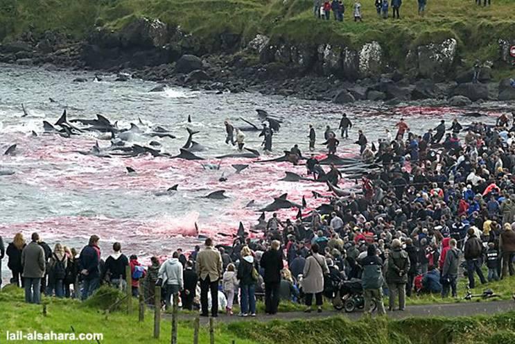 Le massacre des Dauphins Image015