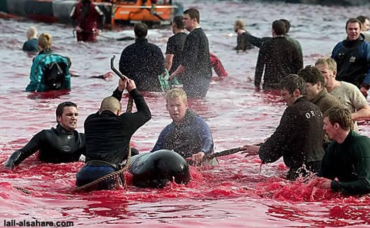 Le massacre des Dauphins Image018