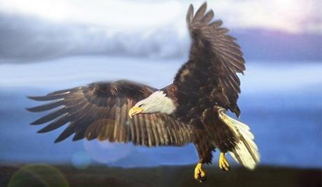 définitions pour l'Aigle dans le rêve Aigle10