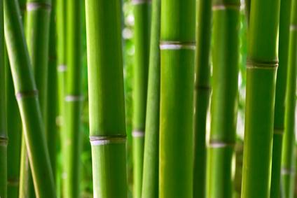 Le massage aux bambous Massag14