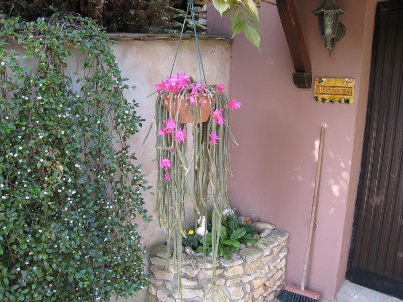 amateurs de cactus et plantes ?  01310