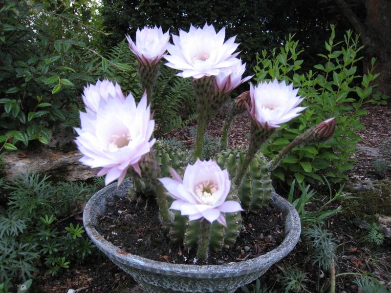 amateurs de cactus et plantes ?  Img_2810