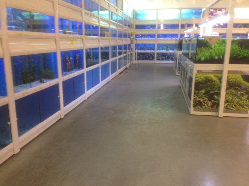 [RECH] BON magasin de poisson  [val d'oise] - Page 2 Img_2315
