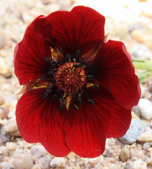 Foire aux Plantules 2014  Img_5111