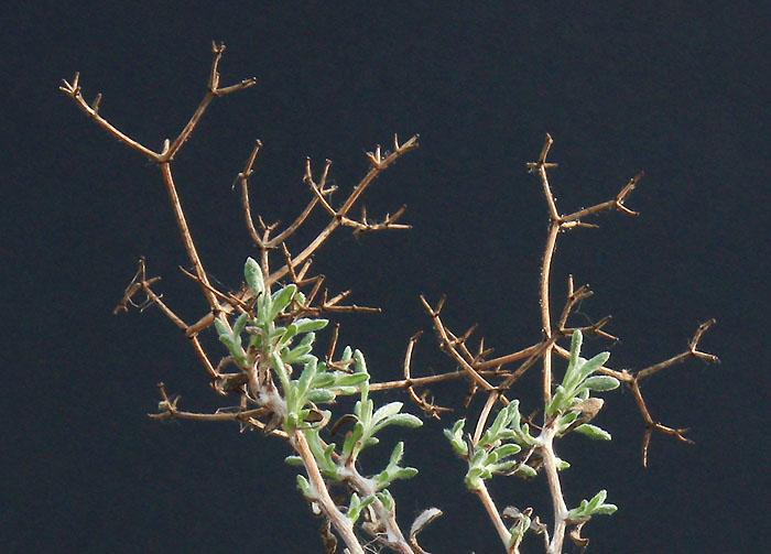 Foire aux Plantules 2014  Img_7411