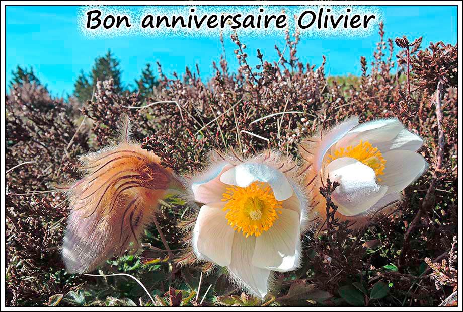 Andalousie et Algarve 2014. 2 Orchis s.l. Olivie10