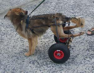 Nouveau chariot pour TCHARA (9 août 2008) Chario13