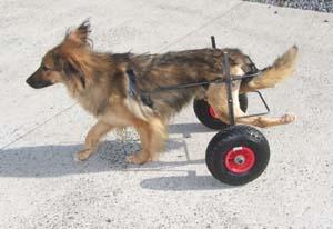 Nouveau chariot pour TCHARA (9 août 2008) Chario17