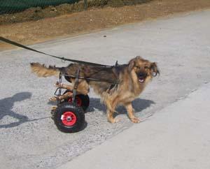 Nouveau chariot pour TCHARA (9 août 2008) Chario18