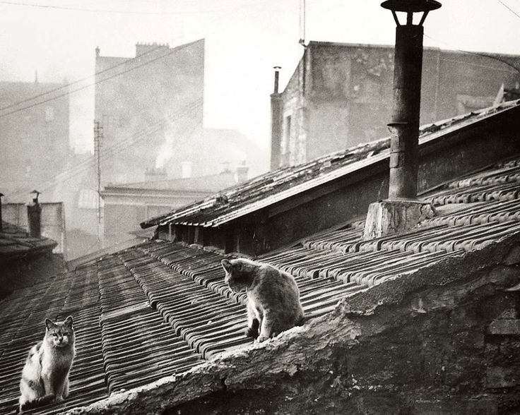 Edouard Boubat [Photographe] - Page 2 Douard10