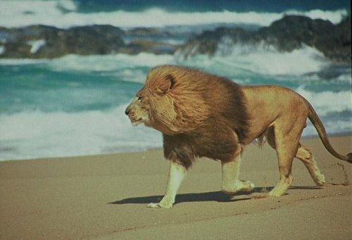Ernest Hemingway    Lion-010