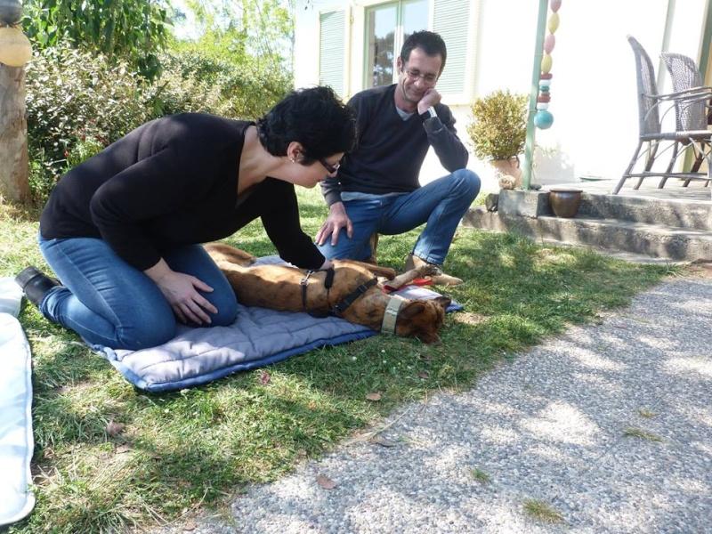 Mirra galga à l'adoption  Scooby France Adoptée  - Page 5 Mirra_15