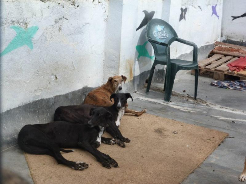 "Theresa – altière et noble galga à l'adoption ""Scooby France""Adoptée Teresa11"