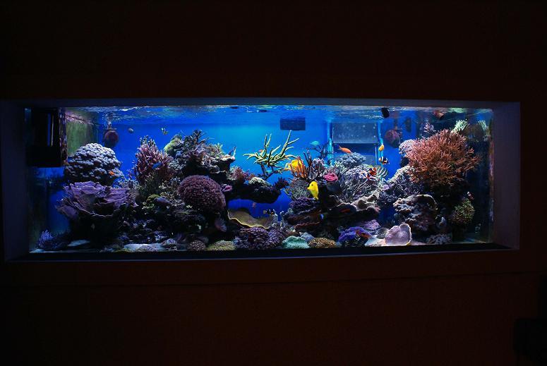 le reef tank d'harold Dsc03413