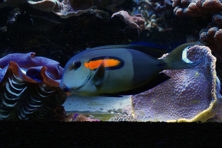 le reef tank d'harold Dsc03414
