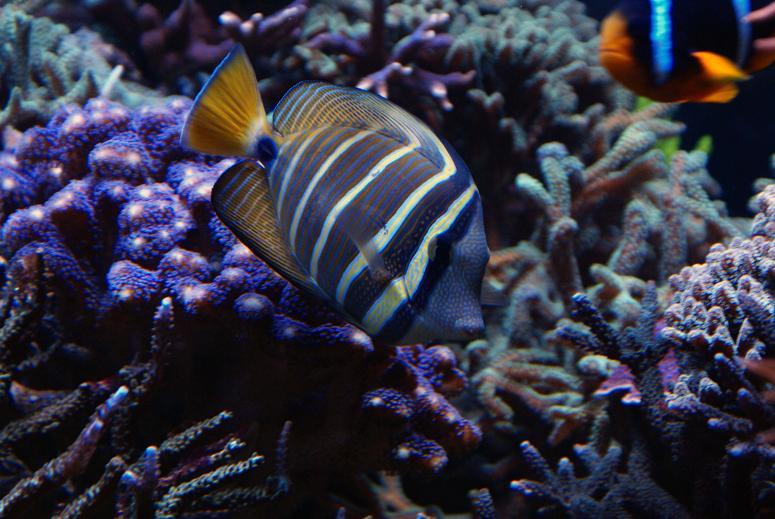 le reef tank d'harold Dsc03416
