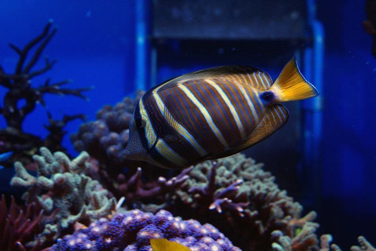 le reef tank d'harold Dsc03417