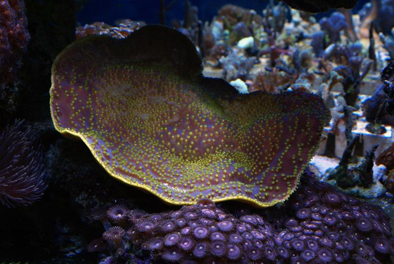 le reef tank d'harold Dsc03418
