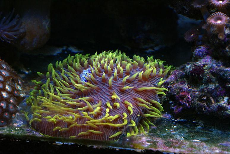 le reef tank d'harold Dsc03420