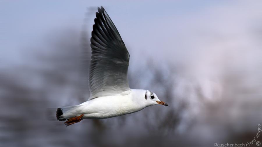 Animaux, oiseaux... etc. tout simplement ! - Page 40 Img_6510
