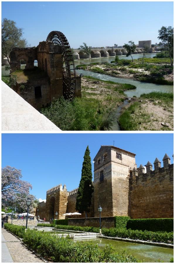 Andalousie et Algarve 2014. 2 Orchis s.l. Cordou11