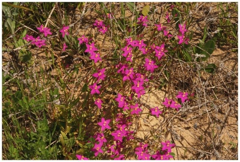 Andalousie et Algarve 2014. 5 Euophrys Dsc_0210