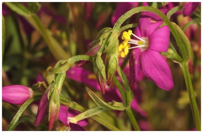 Andalousie et Algarve 2014. 5 Euophrys Dsc_0310