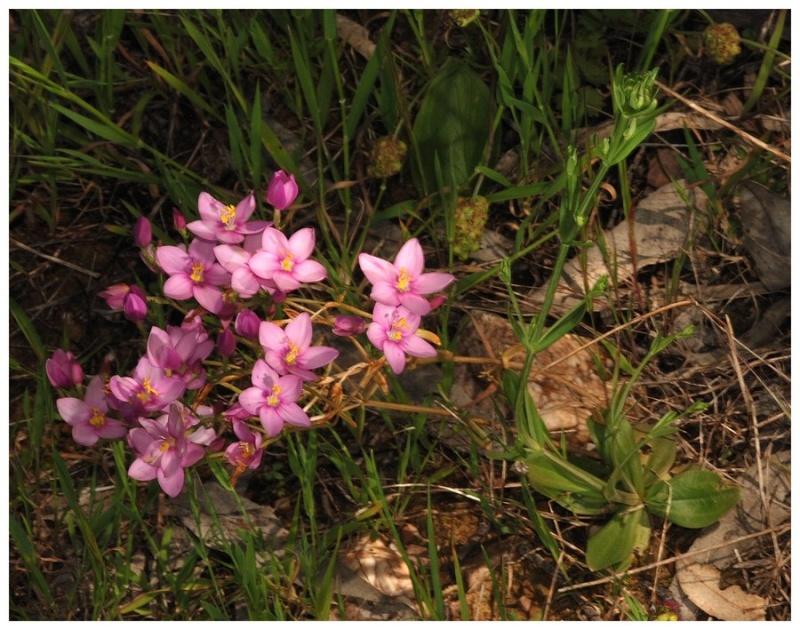 Andalousie et Algarve 2014. 5 Euophrys Dsc_0410
