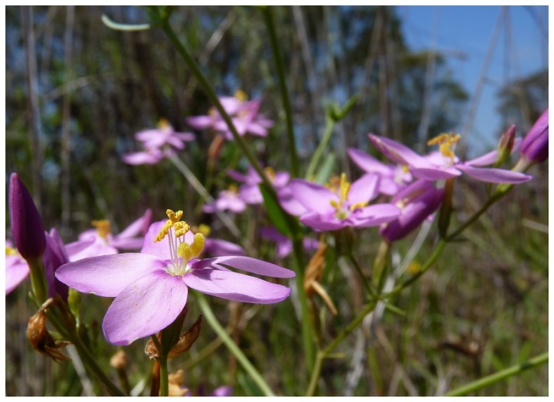 Andalousie et Algarve 2014. 5 Euophrys P1060110