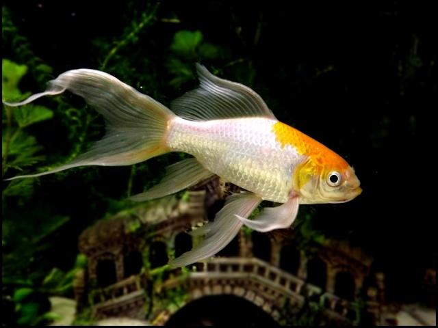 115 L poissons rouges Dscf3316