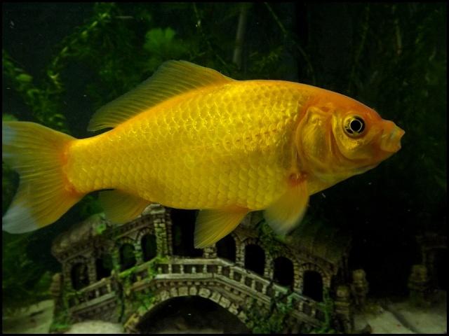 115 L poissons rouges Dscf3317