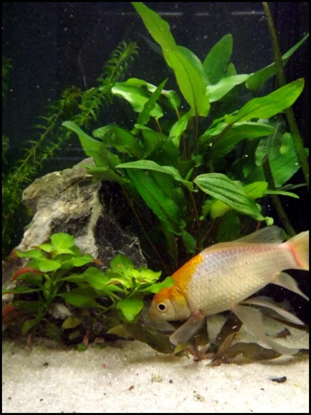 115 L poissons rouges Dscf3413