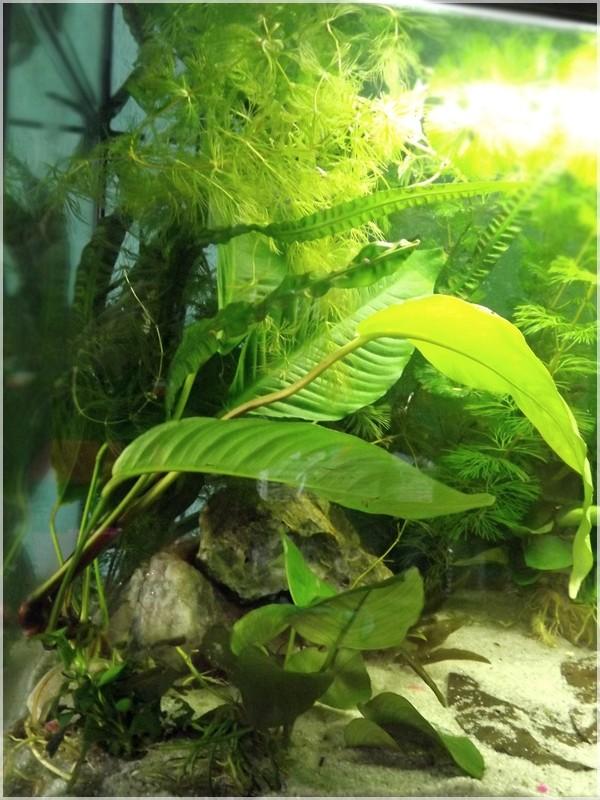 115 L poissons japonais Dscf3619