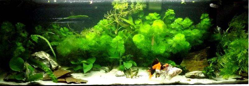 115 L poissons japonais Sans_t13