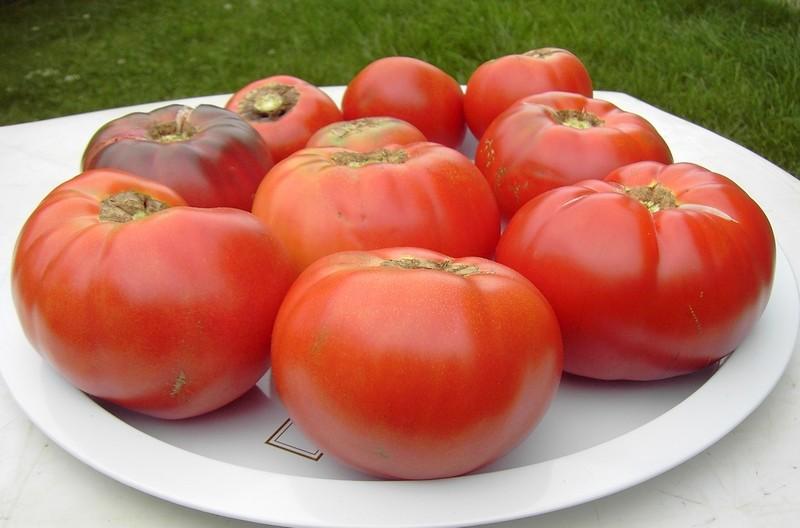 ma petite cueillette Tomate11