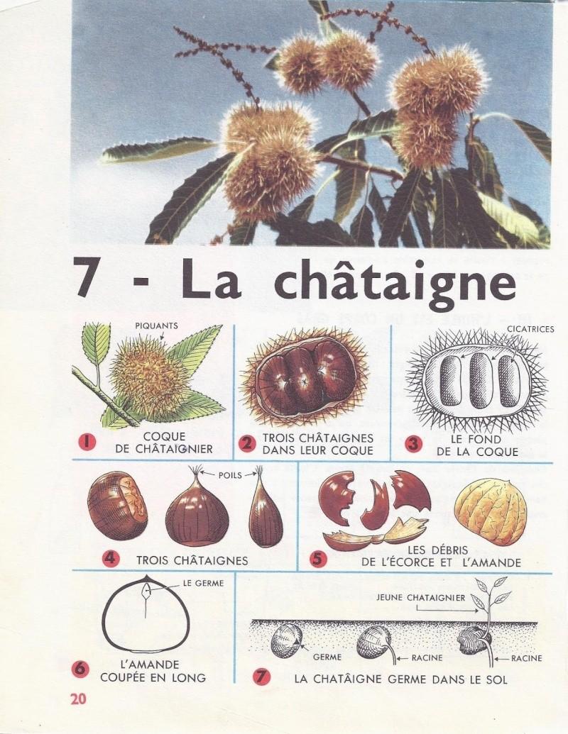 83 - Camps-La-Source - Fête de la Chataigne Chatai11
