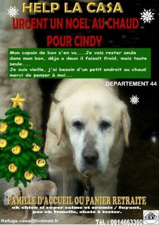 urgent, panier retraite pour Cindy labrador de 13ans (44) 15150011