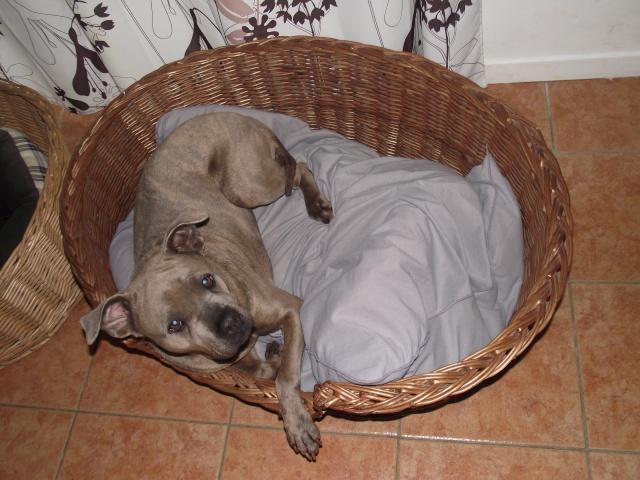 Paniers en osier, dodos chien chat de toute taille Dscf3711