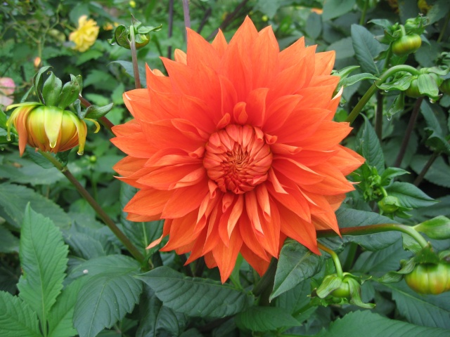 mon extérieur fleuris de mon chez moi lol - Page 9 Img_0715
