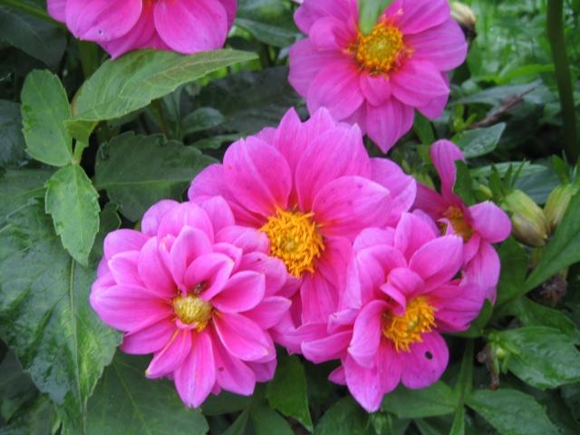 mon extérieur fleuris de mon chez moi lol - Page 9 Img_0836