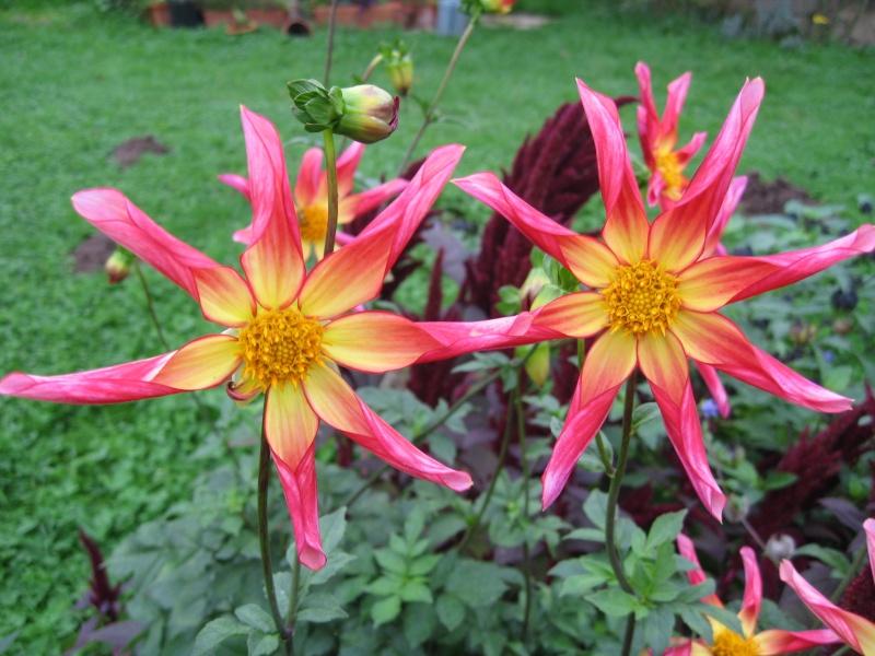 mon extérieur fleuris de mon chez moi lol - Page 9 Img_0837