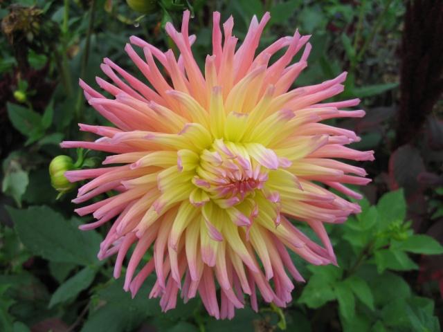 mon extérieur fleuris de mon chez moi lol - Page 9 Img_0838