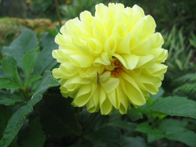 mon extérieur fleuris de mon chez moi lol - Page 9 Img_0840